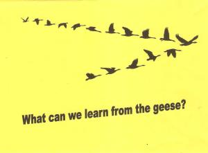 What we can learn from the geese